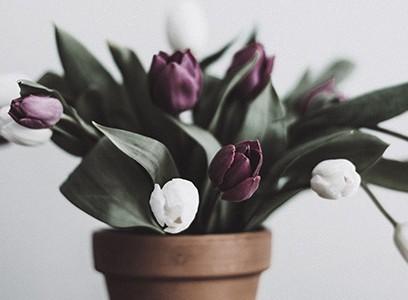 Flower no.01