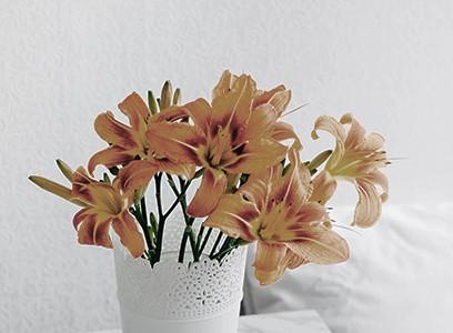 Flower no.03